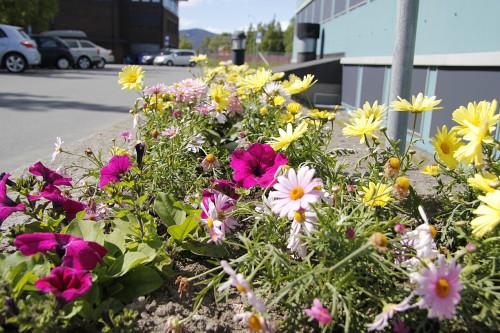 Blomsterbed utenfor Gammellabben (Blåbygget).